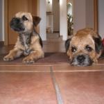 Cookie und Berna